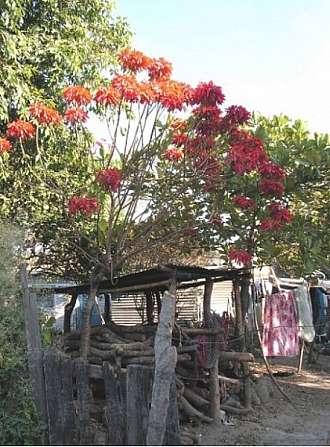 Salvador země sopek a nádherné přírody