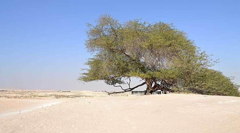 Strom života Shajarat-al-Haya