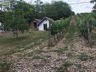 Vinařská vesnička Wildendürnbach
