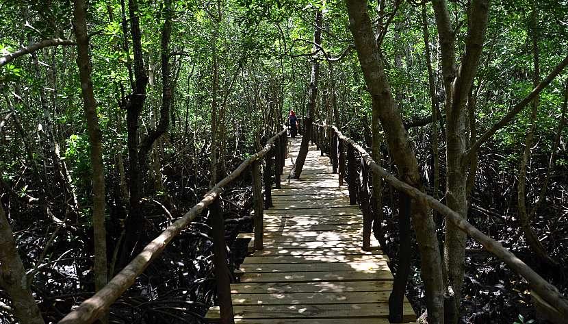 Jozani Forest