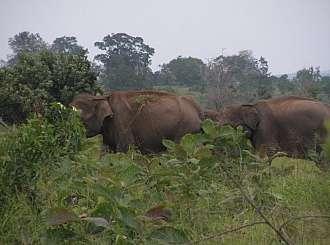 Dvoutýdenní toulky Srí Lankou