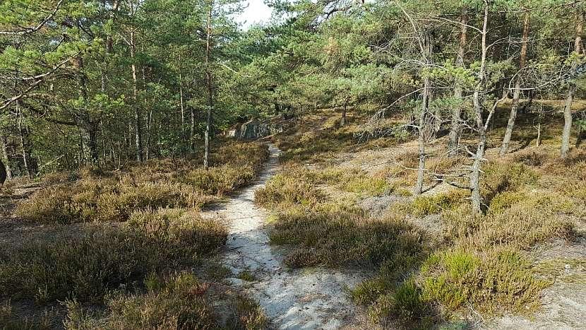 Lesní cesta z parkoviště do Nedvězí