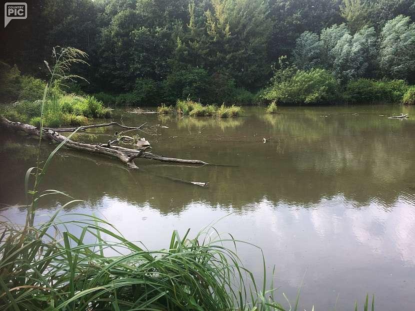Řeka Morava - slepá ramena