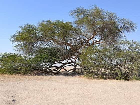 Strom života -Shajarat-al-Hayat.